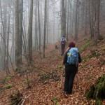 Fast eben führt der Weg die erste Zeit durch den Herbstwald